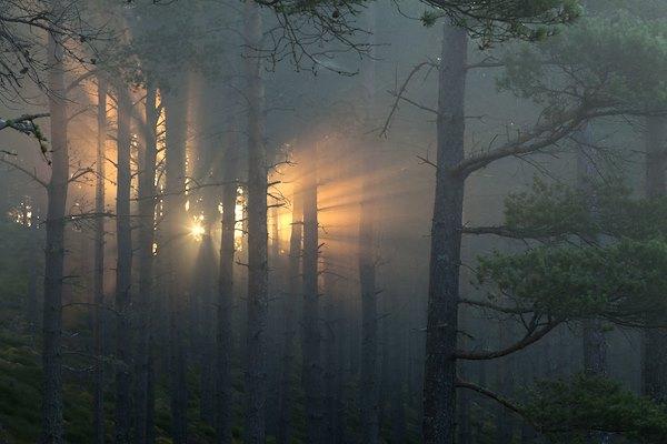Rewilding Scotland <span>by Alan Watson Featherstone</span>