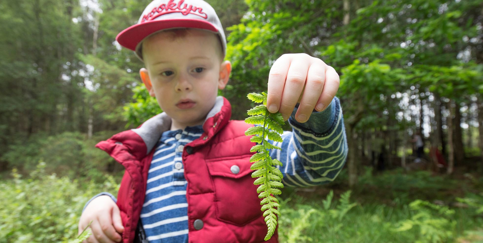 Young boy playing/exploring woodland as part of forest kindergarten session, Mucky Boots, Aberdeen Scotland. MR available