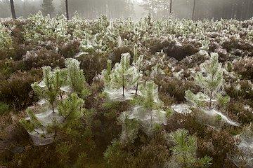 Establish woodland
