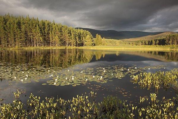 Rewilding offers Scotland a brighter future