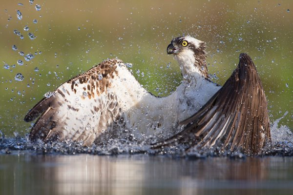 Osprey: On Assignment
